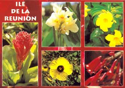 La Réunion. Fleurs et poissons exotiques